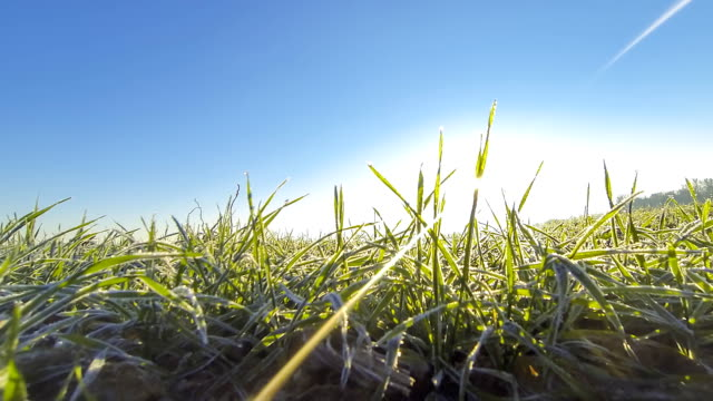 hd time-lapse: new day - grass stock videos & royalty-free footage