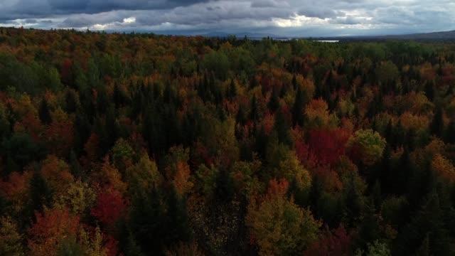 drone foliage autunnale del new england 4k - monti appalachi video stock e b–roll