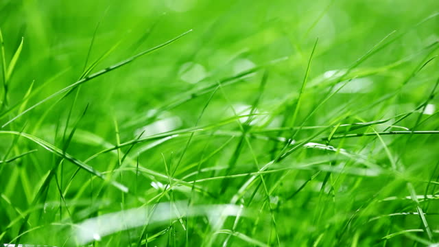 New fresh green garden grass flapping in the wind video
