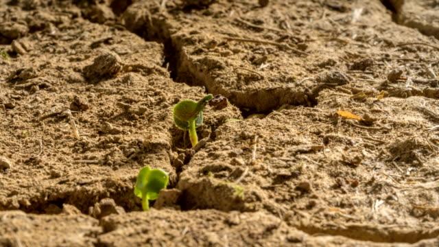 New Life Desert Drought Plants Grow Time Lapse