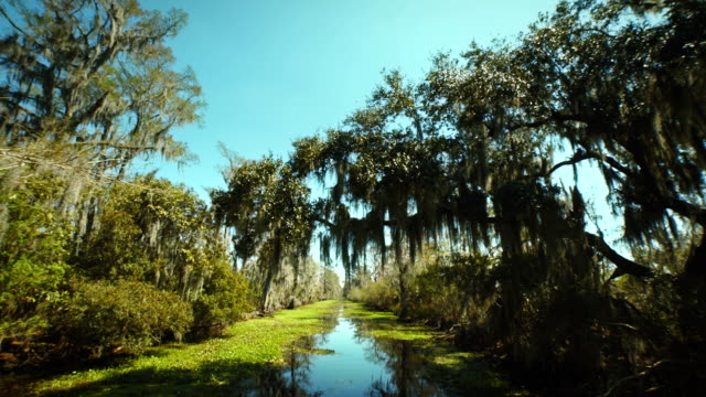 stockvideo's en b-roll-footage met new orleans, march 2014: wide angle shot of moving through the bayou - broek