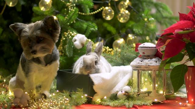 New year dog and rabbit Christmas tree. Biewer Terrier under garland Prasanthi