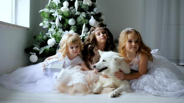 vídeos de stock e filmes b-roll de new year, girlfriends in elegant dresses hug dog on background a christmas tree with white balls - samoiedo