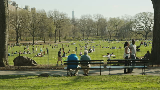 new york manhattan people enjoy spring in central park - park bildbanksvideor och videomaterial från bakom kulisserna