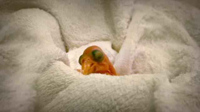 Newborn Baby Bird In Incubator video