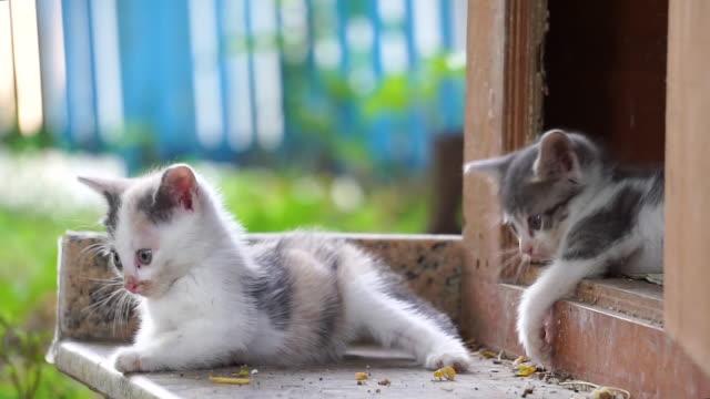 vídeos y material grabado en eventos de stock de gatos recién nacidos de pie y con aspecto lindo - vibrisas