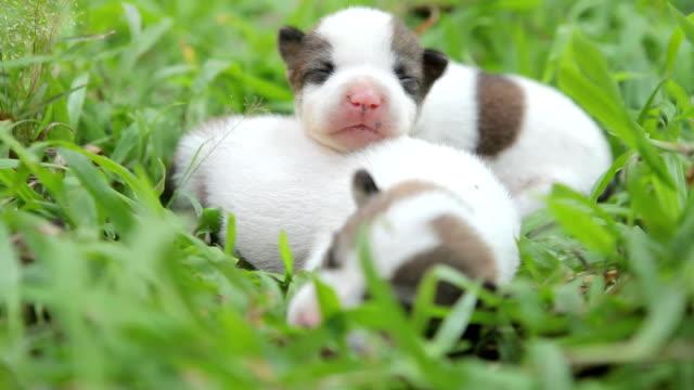 новорожденный милый щенками - молодое животное стоковые видео и кадры b-roll
