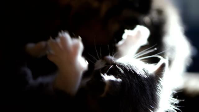 新生児子猫とママ猫。4k ビデオ25フレーム - 子猫点の映像素材/bロール