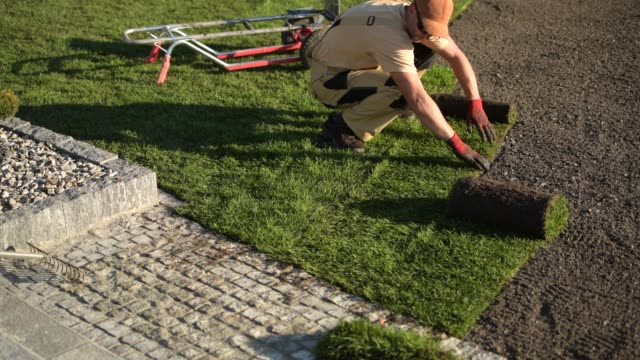 neu entwickelte gartengras rasen installation. - gärtnerisch gestaltet stock-videos und b-roll-filmmaterial