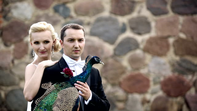newlyweds photographed with peacock sunbird video