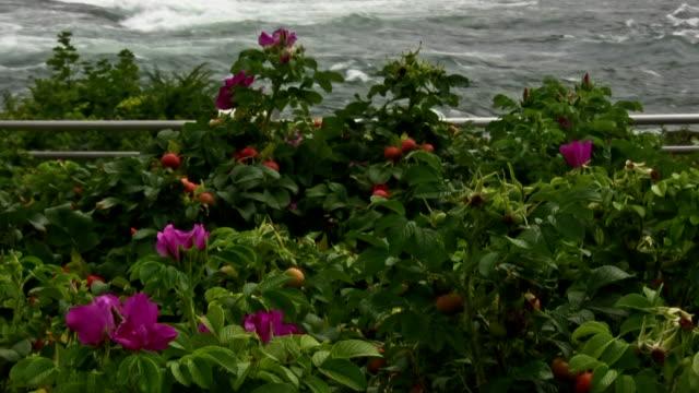 vídeos de stock, filmes e b-roll de do niagara falls - rio niagara