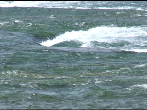 vídeos de stock, filmes e b-roll de niagara cabedal rapids 1-ntsc - rio niagara