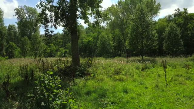 stockvideo's en b-roll-footage met mooi park, groene natuur, bench, drone, bloemen, bomen - netherlands