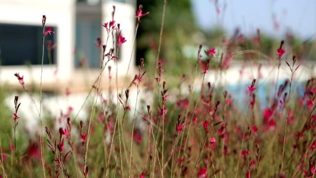 Nice Red Flowers at Garden Nice Red Flowers at Garden Follow Focusing funchal stock videos & royalty-free footage