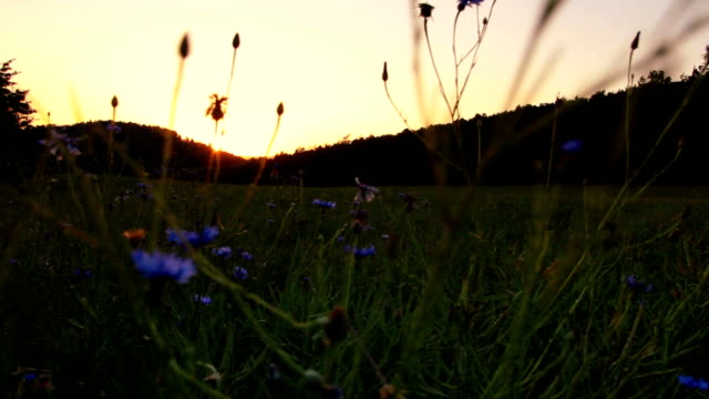 Nice sunset on field with forest and sky. Czech landscape