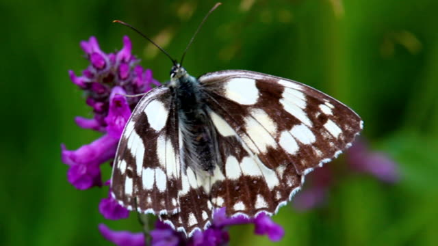 Nice white butterfly with open wings sit on blossom flower