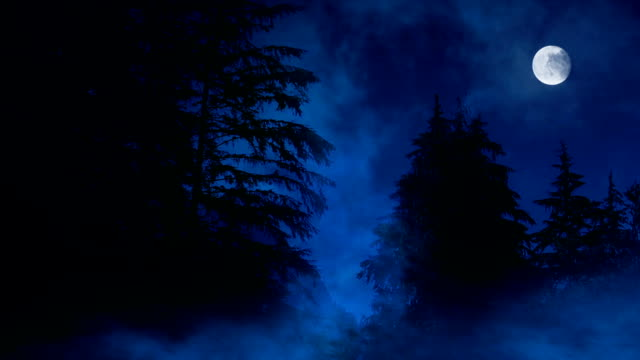 Night Forest Misty Swamp And Moon video