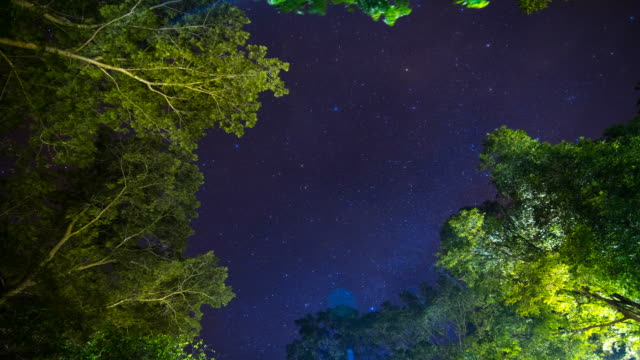 night forest with stars video