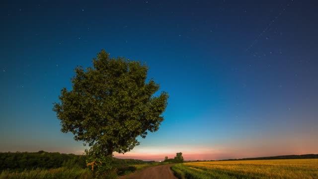 Night in a wheat field