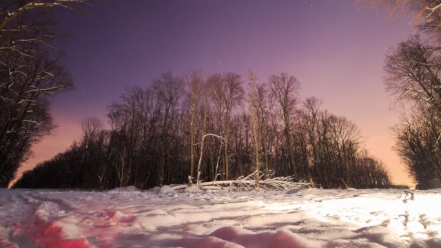 Night in winter forest