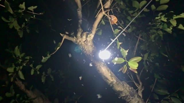 insetti notturni che girano intorno a una lampadina - farfalla ramo video stock e b–roll