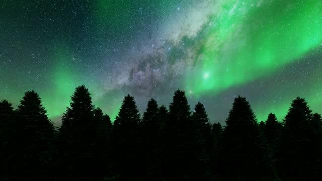 vídeos de stock, filmes e b-roll de pinheiros noturnos ao norte iluminam paisagem de inverno árvores verdes 4k - esmeralda