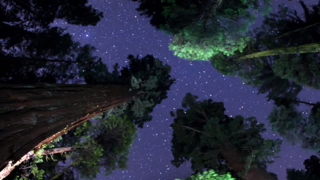 Night Sky - Above the Treetops video