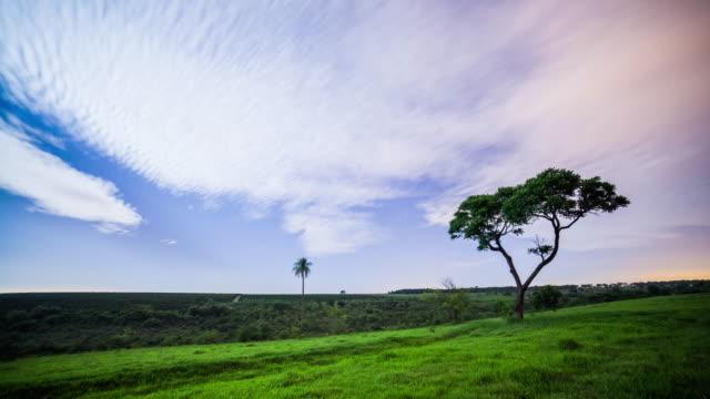 stockvideo's en b-roll-footage met night sky and the tree - minder dan 10 seconden