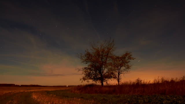 Night sky of stars time-lapse two trees moonlight field landscape video