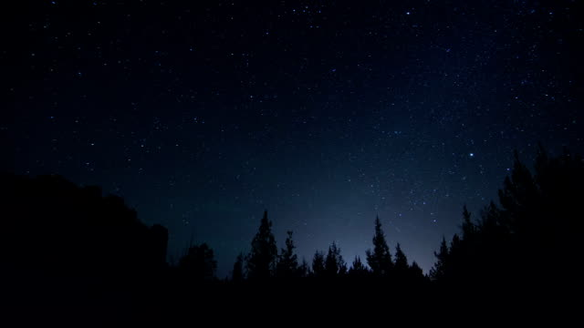 night sky time lapse with tree silhouette - nightsky bildbanksvideor och videomaterial från bakom kulisserna