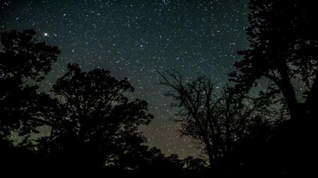 night sky timelapse starscape and meteors over forest - earth from space bildbanksvideor och videomaterial från bakom kulisserna