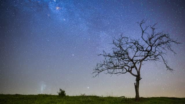 stockvideo's en b-roll-footage met night sky with dry tree - minder dan 10 seconden