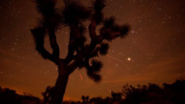 0038 夜の時間の経過でジョシュアツリー - ジョシュアツリー国立公園点の映像素材/bロール
