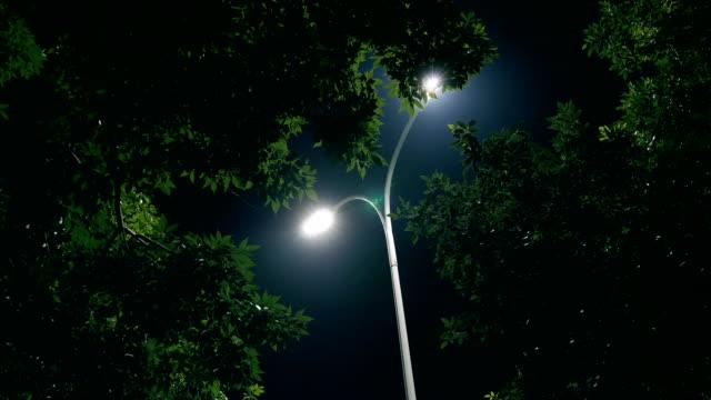 Night tree and lamp