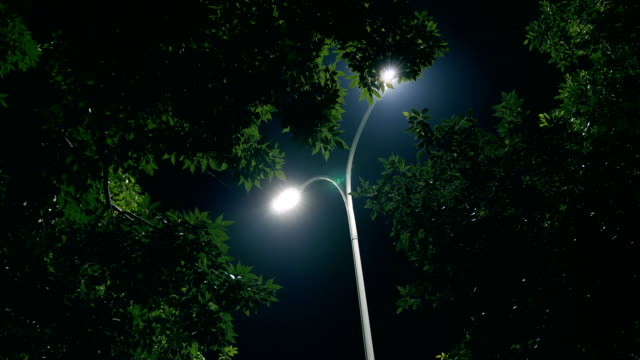 night tree and lamp - luce stradale video stock e b–roll