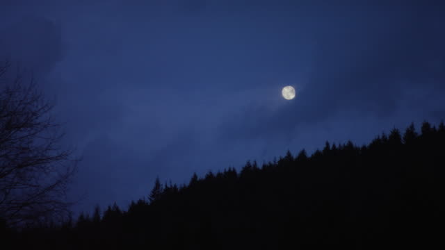 Nighttime forest scene with moon at dusk