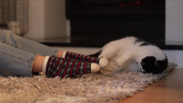 ninja cat will not be defeated by the sock monster! - lanuginoso video stock e b–roll