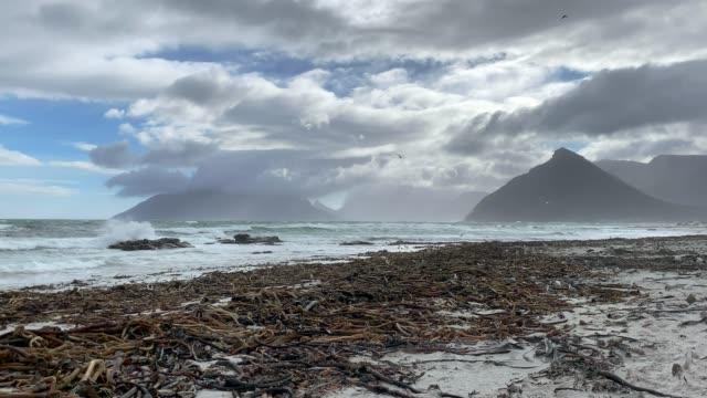 Nordhoek Beach in the Western Cape Nordhoek Beach in the Western Cape with seaweed washed ashore. cape peninsula stock videos & royalty-free footage