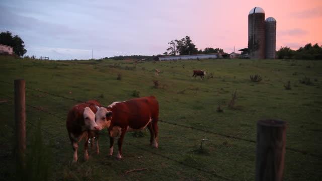 North Carolina Dairy Farm video