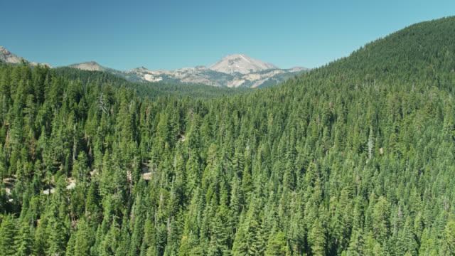 Northern California Forest with Lassen Peak in Distance