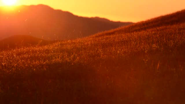 Northern California Summer Hills. Summer Flora and Fauna.