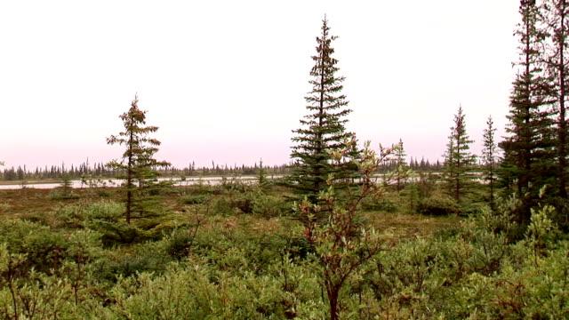 vidéos et rushes de bois nord du canada - nord