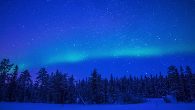 northern lights over the winter forest. time lapse - aurora boreale video stock e b–roll