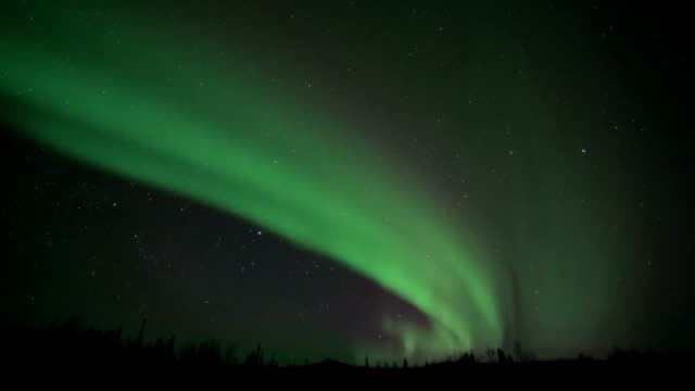 northern lights swirl above pine forest - aurora boreale video stock e b–roll