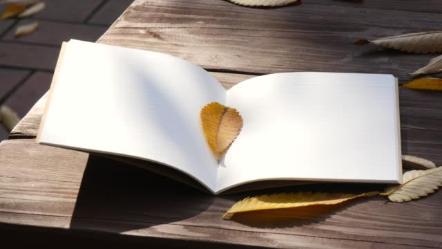 秋の光のツリーの下でテーブルの上に注意してください。 - ベンチ点の映像素材/bロール