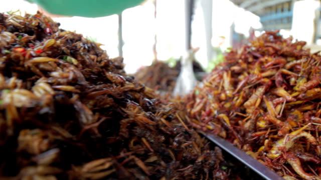 berüchtigte fehler essen von asien - grashüpfer stock-videos und b-roll-filmmaterial