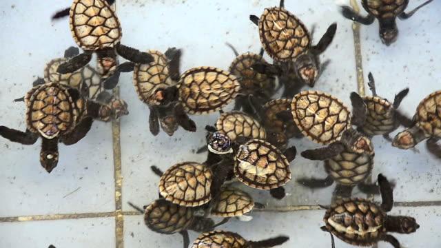 Nursery of baby sea turtle Nursery of baby sea turtle plant nursery stock videos & royalty-free footage