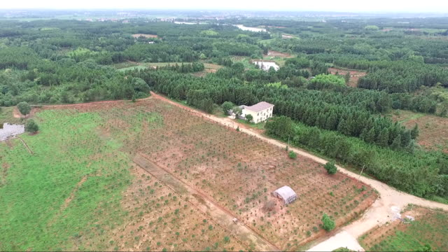 nursery-grown plant field view from air video
