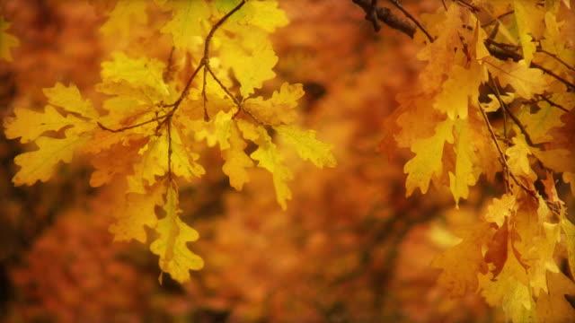 Oak Branch video