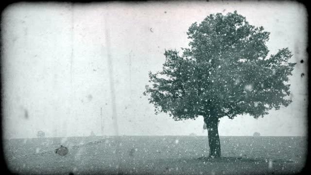 Oak Tree in Blizzard video